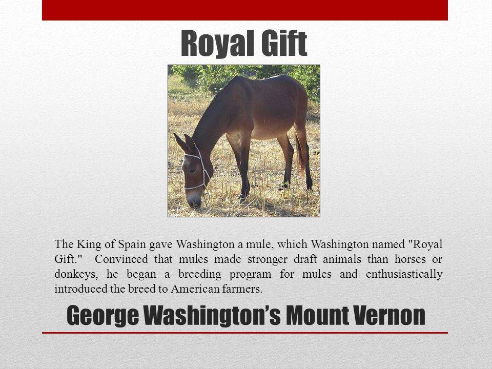 George Washingtons Mount Vernon The King of Spain gave Washington a mule, which Washington named