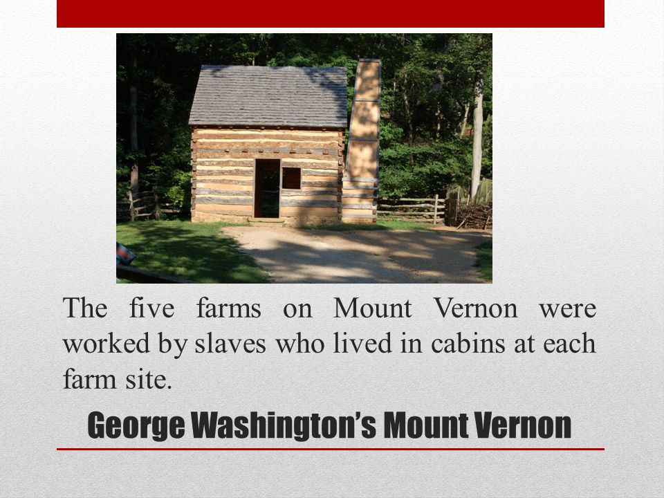 The five farms on Mount Vernon were worked by slaves who lived in cabins at each farm site. George Washingtons Mount Vernon