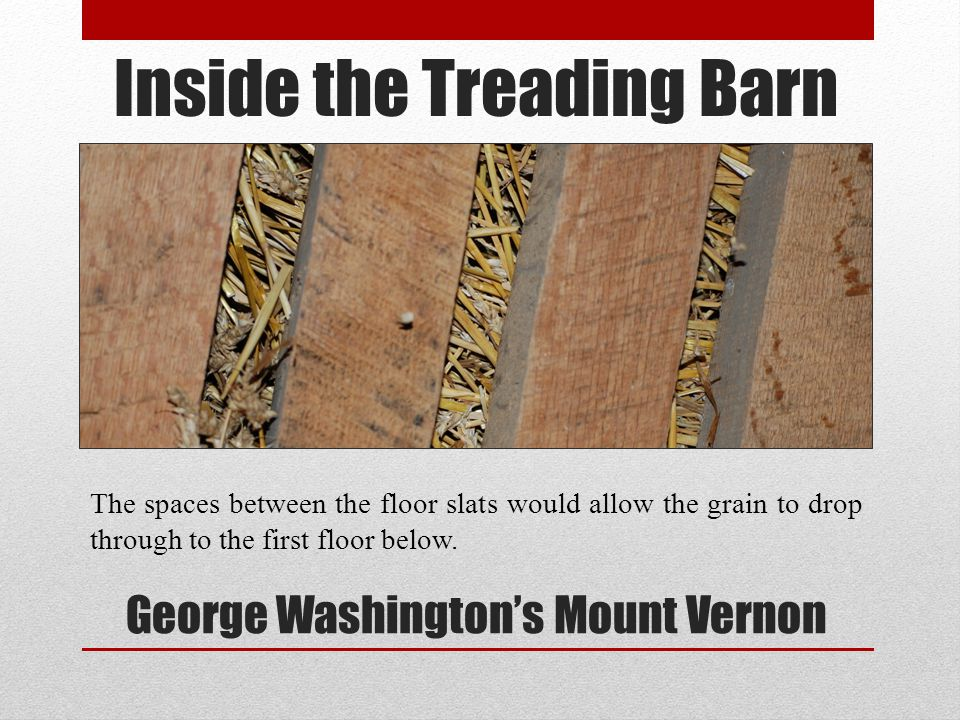 Inside the Treading Barn George Washingtons Mount Vernon The spaces between the floor slats would allow the grain to drop through to the first floor b