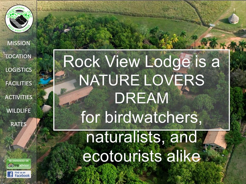 LOCATION FACILITIES ACTIVITIES LOGISTICS WILDLIFE RATES MISSION Rock View Lodge is a NATURE LOVERS DREAM for birdwatchers, naturalists, and ecotourists alike Rock View Lodge is a NATURE LOVERS DREAM for birdwatchers, naturalists, and ecotourists alike