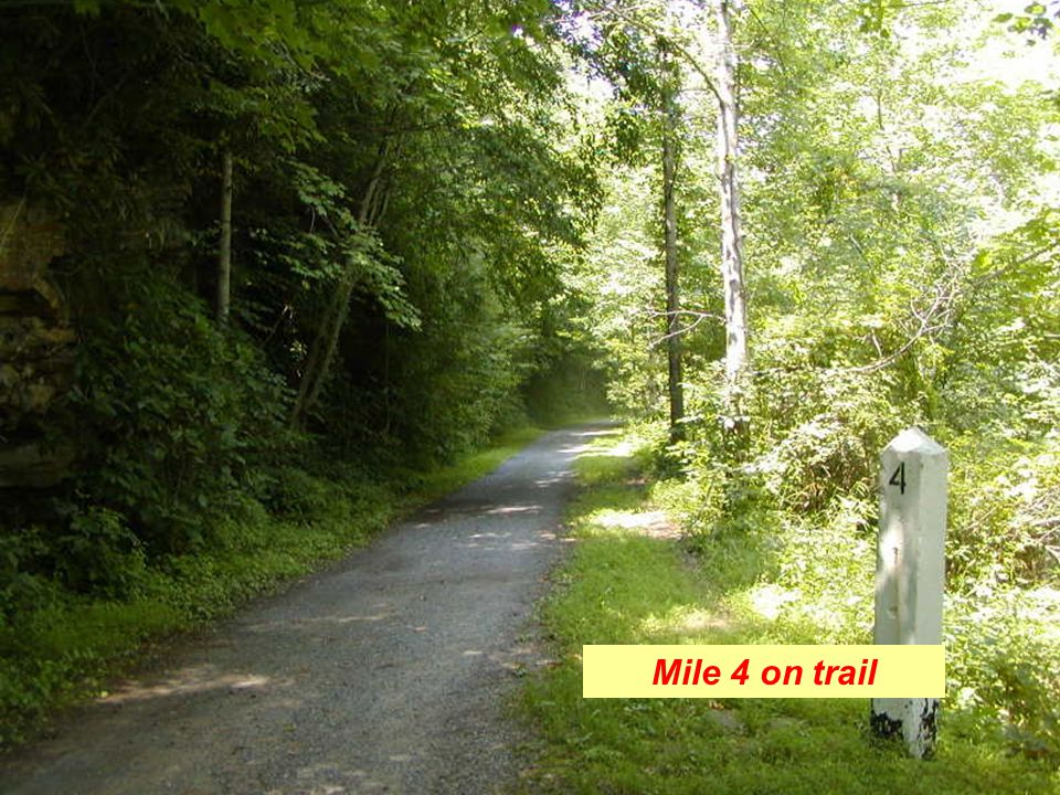 Mile 4 on trail