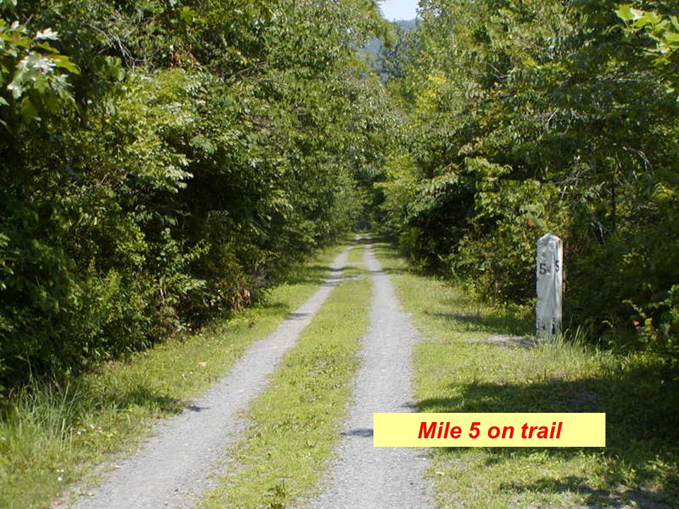 Mile 5 on trail