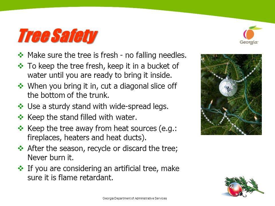 Georgia Department of Administrative Services 8 Tree Safety Make sure the tree is fresh - no falling needles. To keep the tree fresh, keep it in a buc