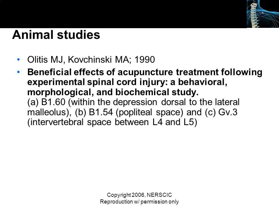 Copyright 2006, NERSCIC Reproduction w/ permission only Animal studies Olitis MJ, Kovchinski MA; 1990 Beneficial effects of acupuncture treatment foll