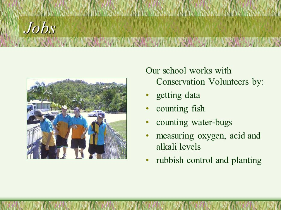 Jobs Our school works with Conservation Volunteers by: getting data counting fish counting water-bugs measuring oxygen, acid and alkali levels rubbish control and planting