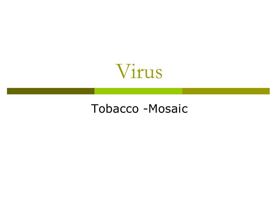 Virus Tobacco -Mosaic