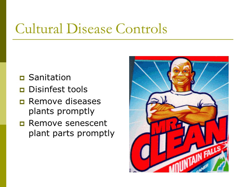 Cultural Disease Controls Sanitation Disinfest tools Remove diseases plants promptly Remove senescent plant parts promptly