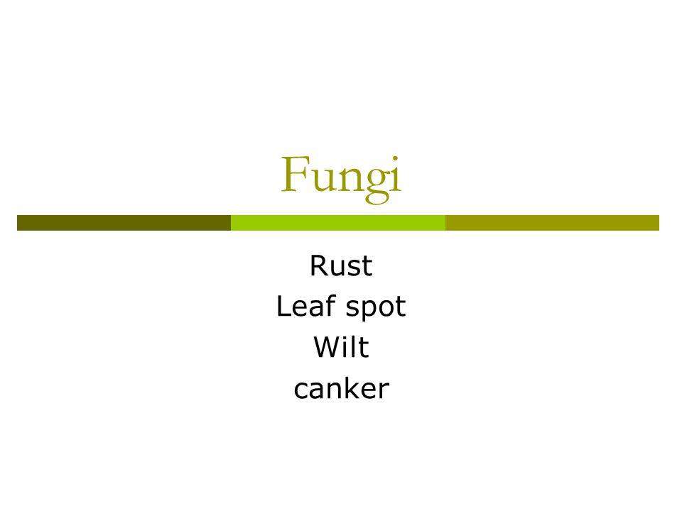 Fungi Rust Leaf spot Wilt canker