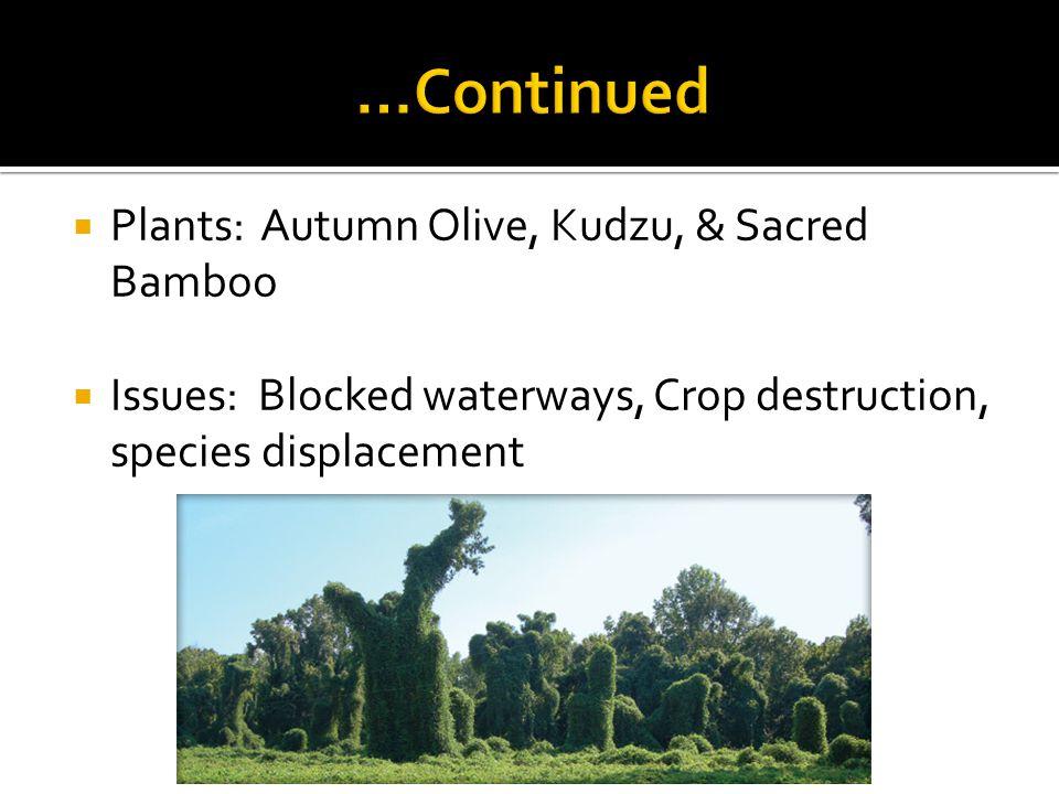 Plants: Autumn Olive, Kudzu, & Sacred Bamboo Issues: Blocked waterways, Crop destruction, species displacement