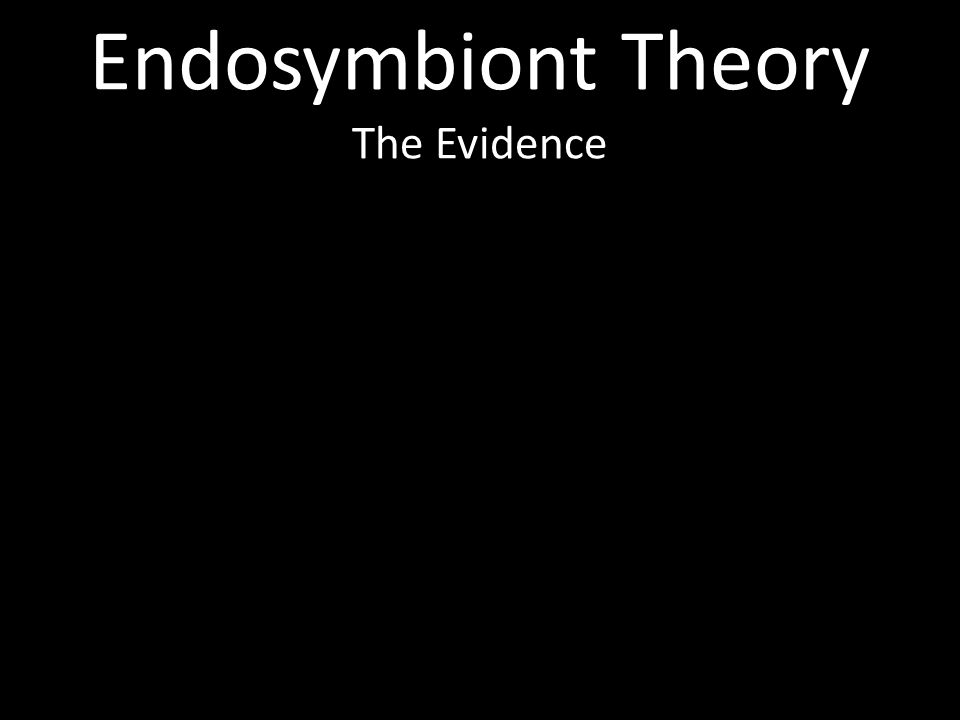 Endosymbiont Theory The Evidence