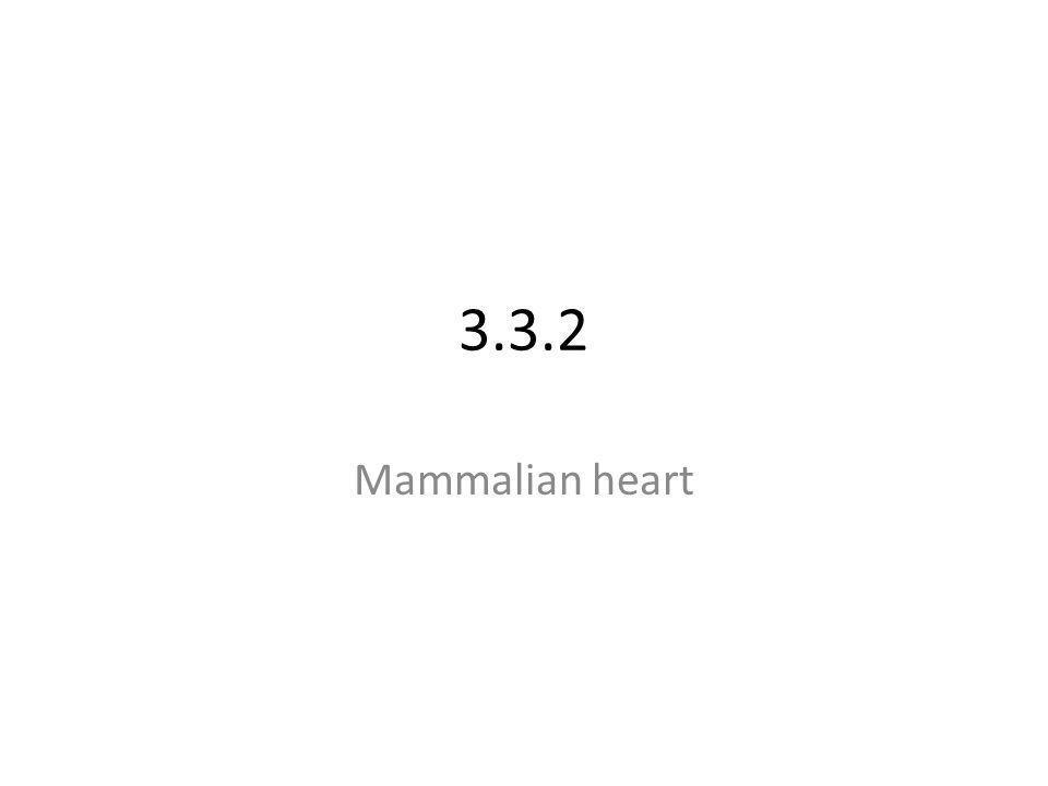 3.3.2 Mammalian heart
