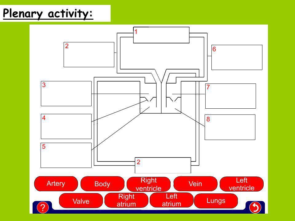 Plenary activity: