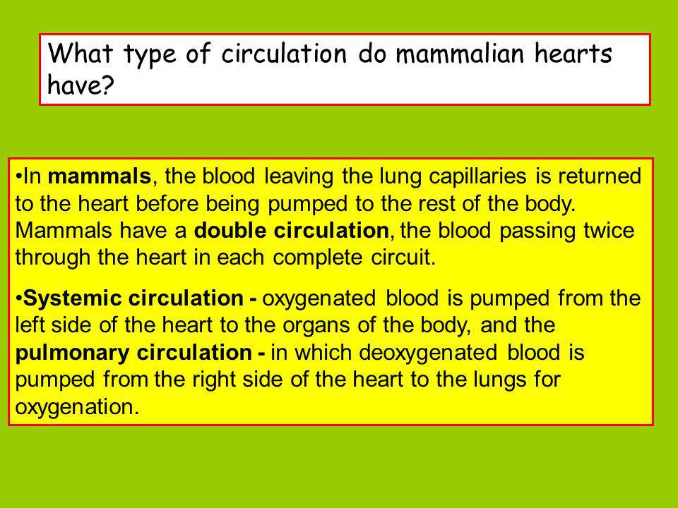 This section of the system including the right side of the heart, deals with the deoxygenated blood.