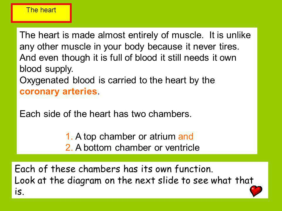 The heart is made almost entirely of muscle. It is unlike any other muscle in your body because it never tires. And even though it is full of blood it