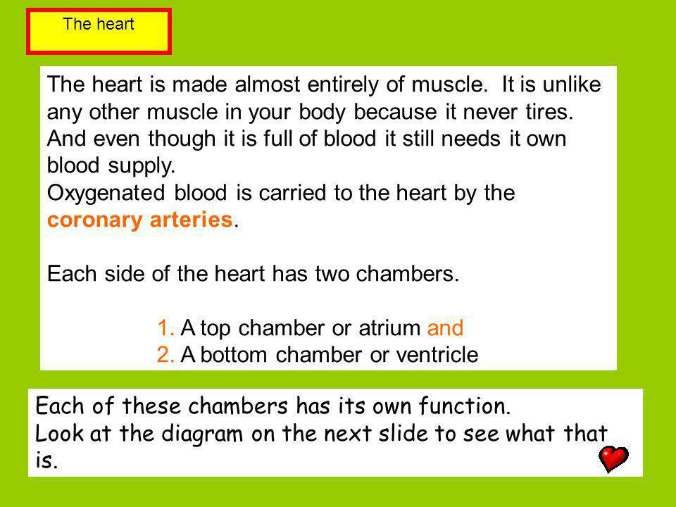Vena cava Pulmonary artery Aorta Pulmonary vein Name the 4 blood vessels?