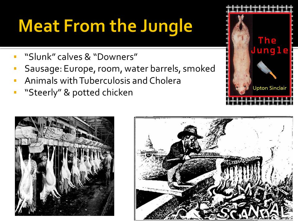 Slunk calves & Downers Sausage: Europe, room, water barrels, smoked Animals with Tuberculosis and Cholera Steerly & potted chicken