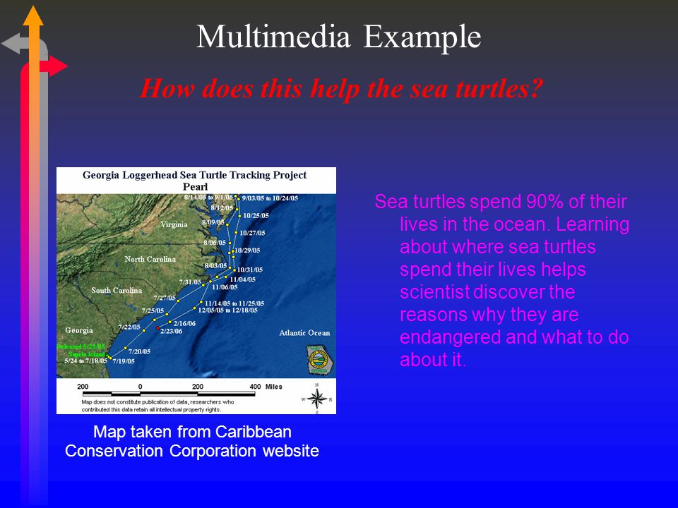 How does this help the sea turtles. Sea turtles spend 90% of their lives in the ocean.