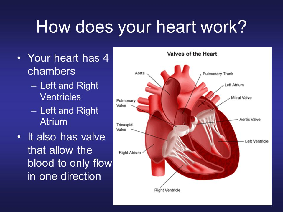 How does your heart work? Your heart has 4 chambers –Left and Right Ventricles –Left and Right Atrium It also has valve that allow the blood to only f