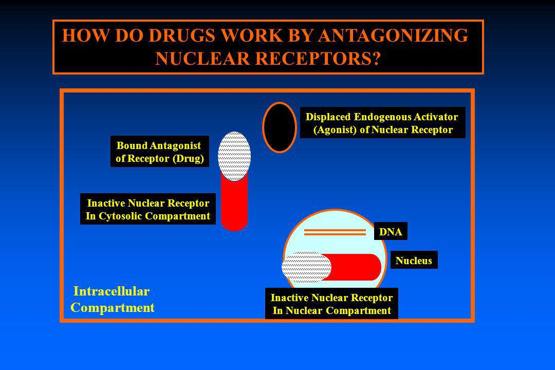 HOW DO DRUGS WORK BY ANTAGONIZING NUCLEAR RECEPTORS? Displaced Endogenous Activator (Agonist) of Nuclear Receptor Intracellular Compartment Nucleus DN