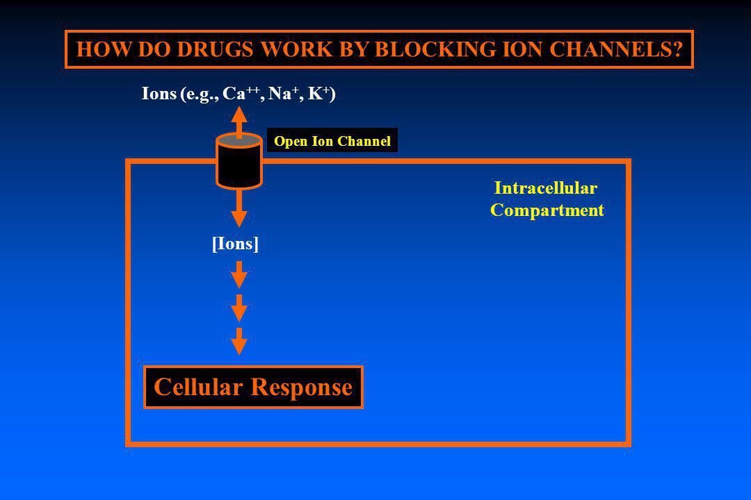 HOW DO DRUGS WORK BY BLOCKING ION CHANNELS? Open Ion Channel Intracellular Compartment Ions (e.g., Ca ++, Na +, K + ) [Ions] Cellular Response