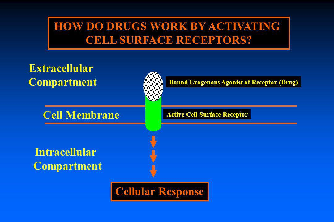 HOW DO DRUGS WORK BY ACTIVATING CELL SURFACE RECEPTORS? Cell Membrane Active Cell Surface Receptor Extracellular Compartment Intracellular Compartment