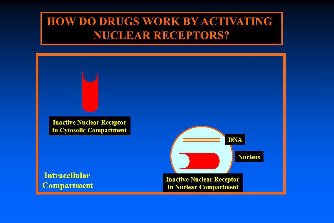 HOW DO DRUGS WORK BY ACTIVATING NUCLEAR RECEPTORS? Inactive Nuclear Receptor In Cytosolic Compartment Intracellular Compartment Nucleus DNA Inactive N