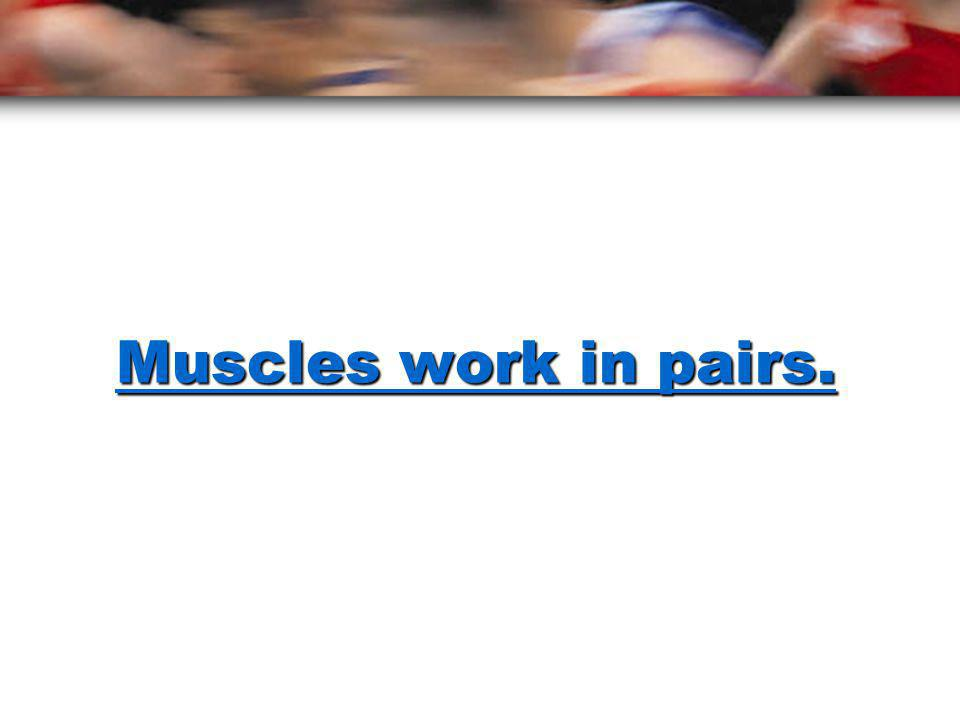 contract? What happens when muscles contract? pull A muscle has to pull for contraction to occur. pulls on the bone The muscle pulls on the bone to ma