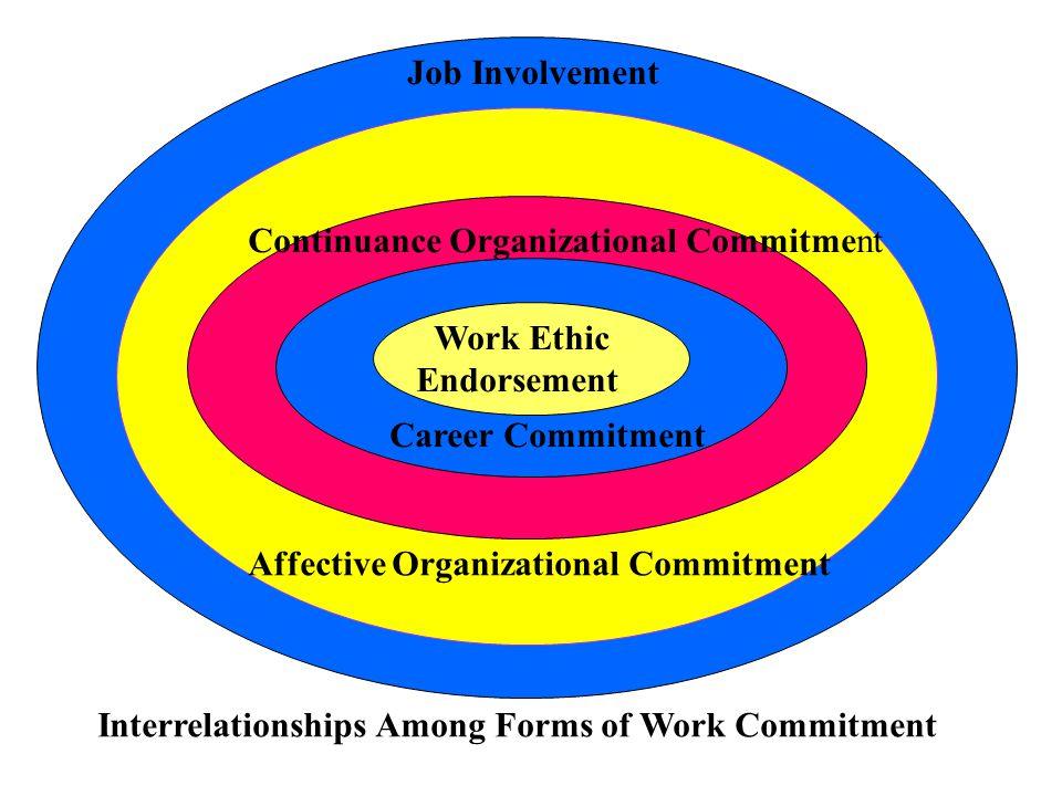 Job Involvement Affective Organizational Commitment Continuance Organizational Commitment Career Commitment Work Ethic Endorsement Interrelationships