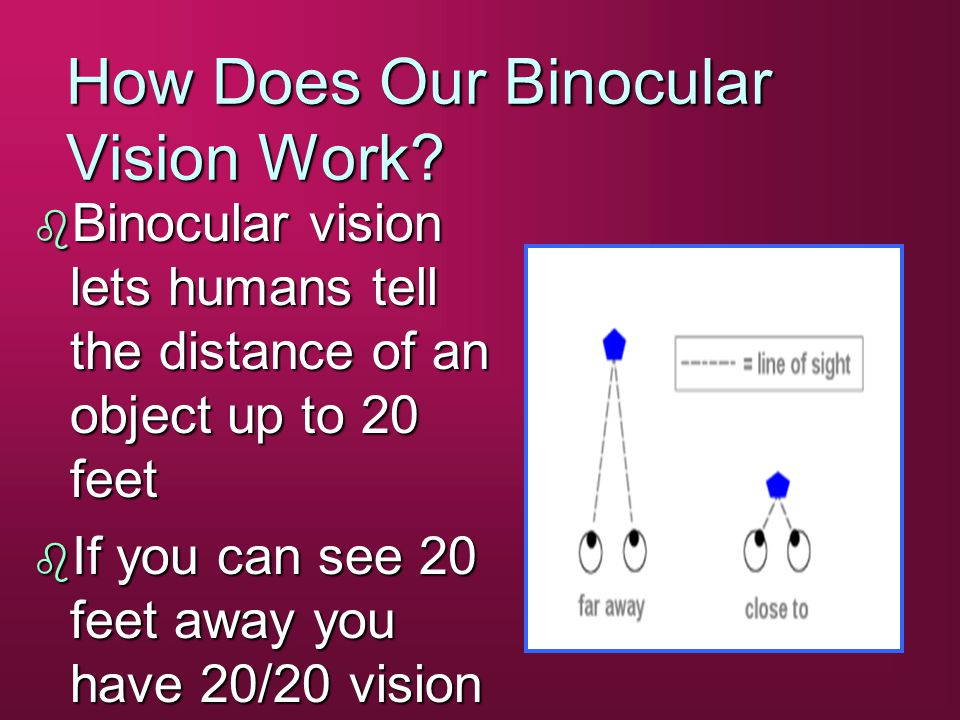 How Does Our Binocular Vision Work.