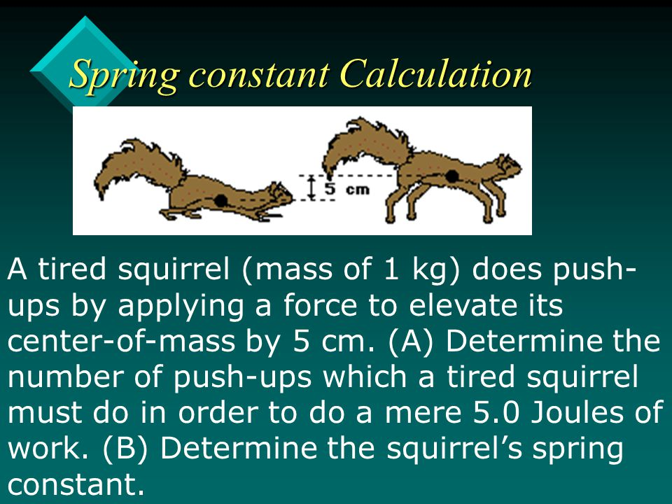 Spring constant Calculation A tired squirrel (mass of 1 kg) does push- ups by applying a force to elevate its center-of-mass by 5 cm.