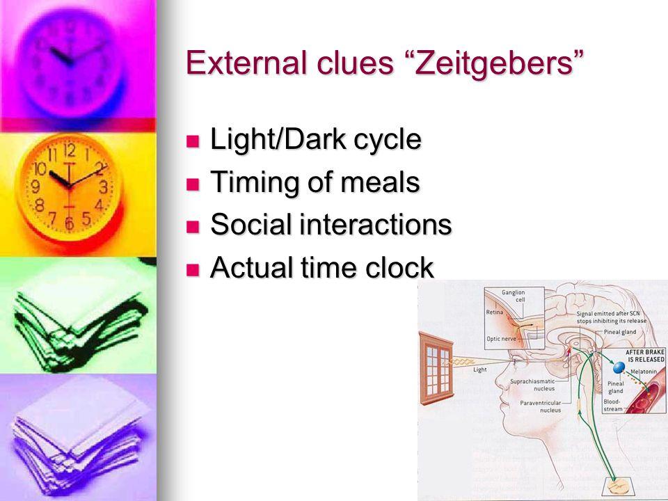 External clues Zeitgebers Light/Dark cycle Light/Dark cycle Timing of meals Timing of meals Social interactions Social interactions Actual time clock
