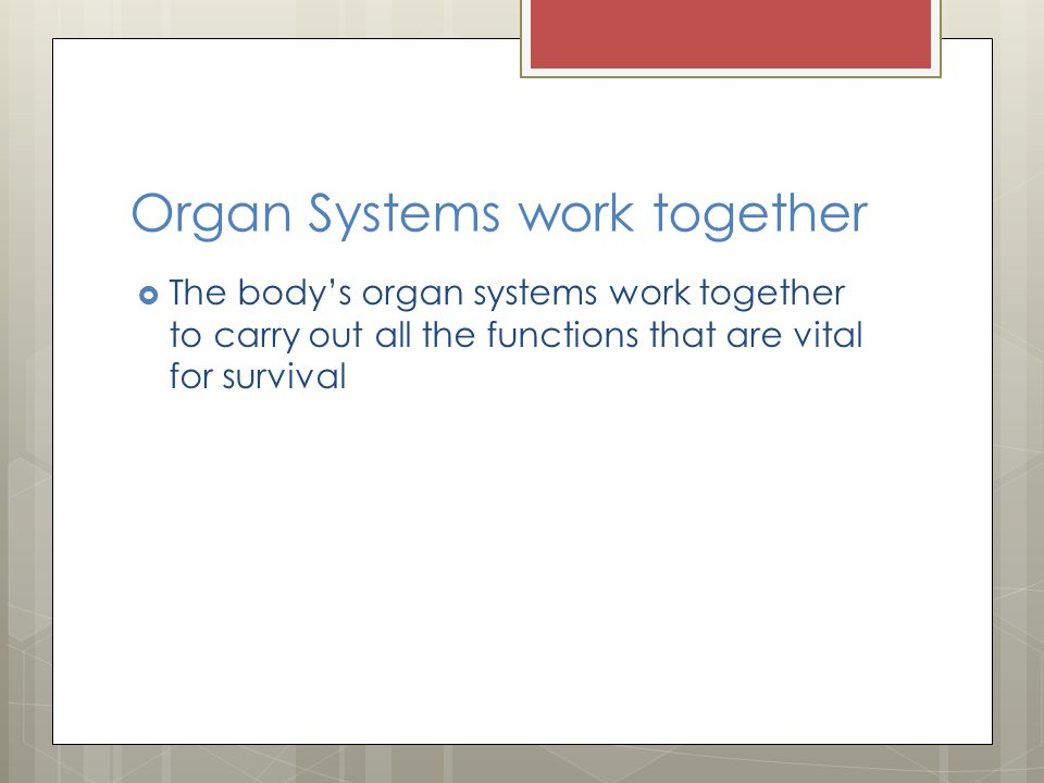 Organ Systems work together The bodys organ systems work together to carry out all the functions that are vital for survival