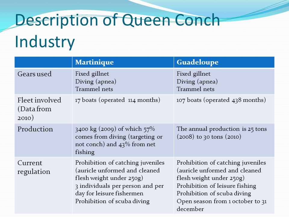 Description of Queen Conch Industry MartiniqueGuadeloupe Gears used Fixed gillnet Diving (apnea) Trammel nets Fixed gillnet Diving (apnea) Trammel nets Fleet involved (Data from 2010) 17 boats (operated 114 months)107 boats (operated 438 months) Production 3400 kg (2009) of which 57% comes from diving (targeting or not conch) and 43% from net fishing The annual production is 25 tons (2008) to 30 tons (2010) Current regulation Prohibition of catching juveniles (auricle unformed and cleaned flesh weight under 250g) 3 individuals per person and per day for leisure fishermen Prohibition of scuba diving Prohibition of catching juveniles (auricle unformed and cleaned flesh weight under 250g) Prohibition of leisure fishing Prohibition of scuba diving Open season from 1 october to 31 december