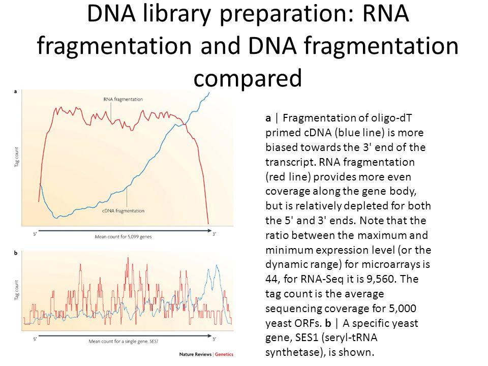 DNA library preparation: RNA fragmentation and DNA fragmentation compared a | Fragmentation of oligo-dT primed cDNA (blue line) is more biased towards