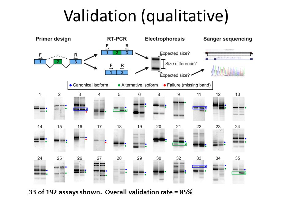 Validation (qualitative) 33 of 192 assays shown. Overall validation rate = 85%