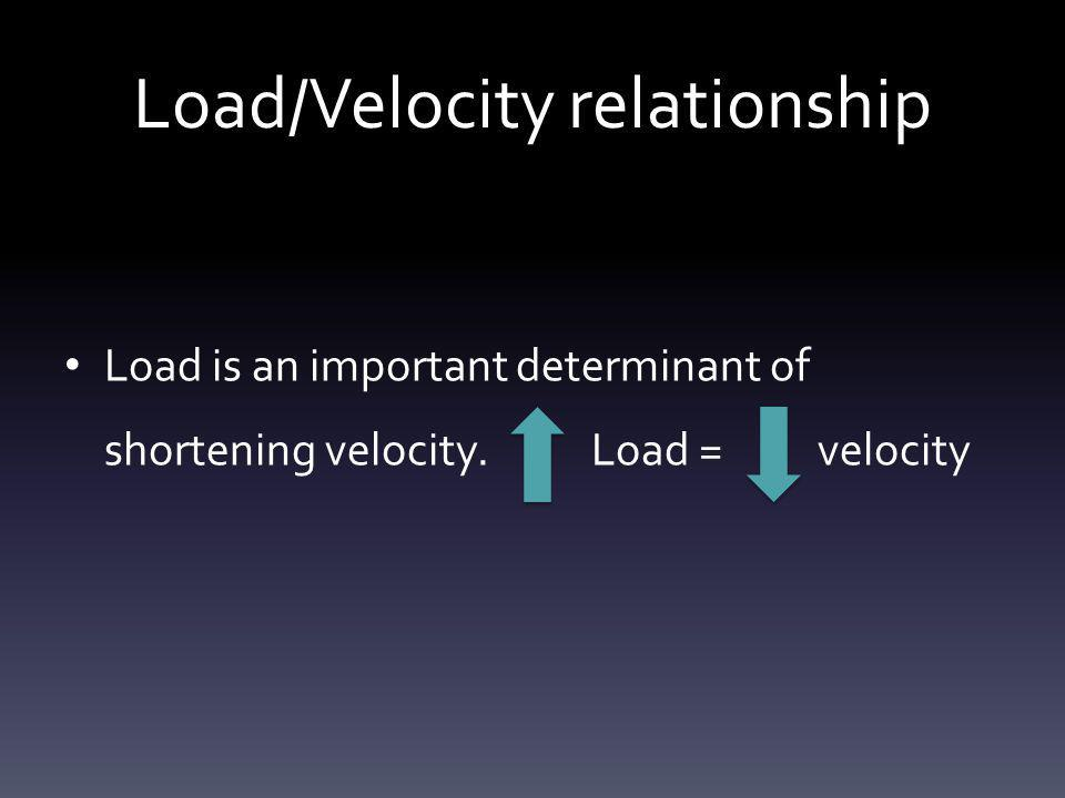 Load/Velocity relationship Load is an important determinant of shortening velocity. Load = velocity