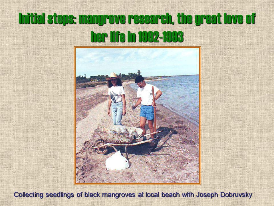 Initial steps: mangrove research, the great love of her life in 1992-1993 Collecting propagules of black mangroves for experiments in Balandra Lagoon