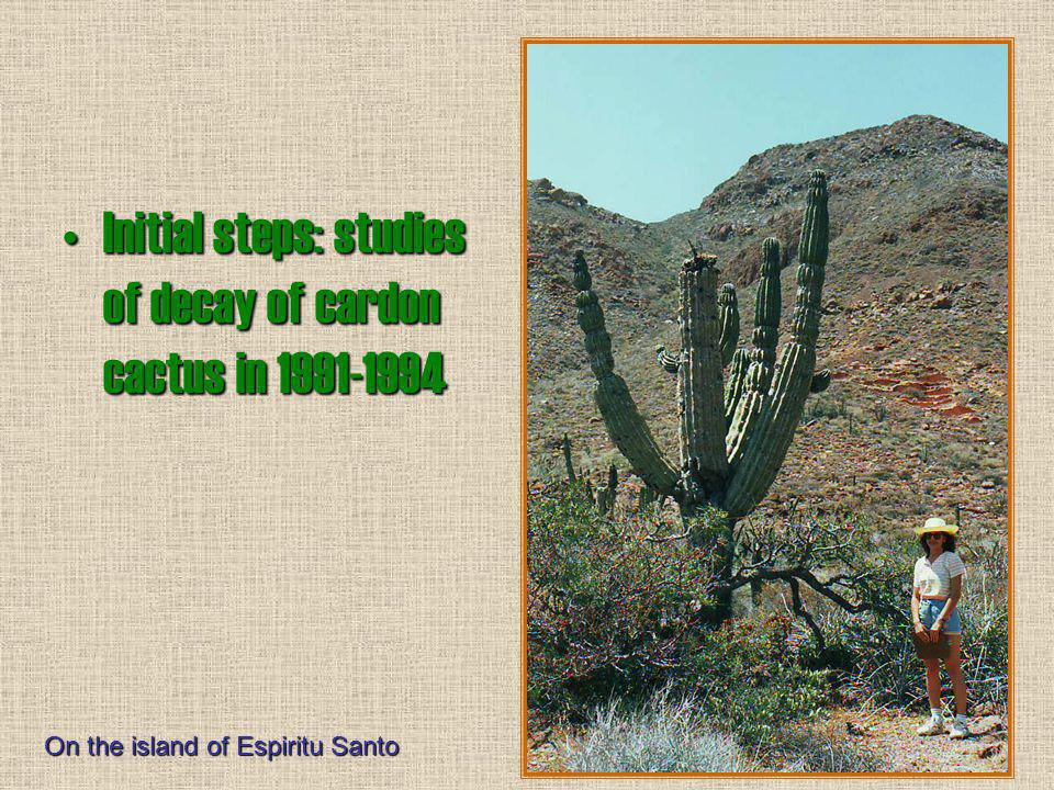 Initial steps: studies of decay of cardon cactus in 1991-1994 On the island of Espiritu Santo