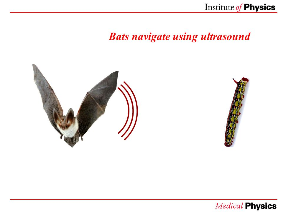 Bats: Navigating with ultrasound Bats make high-pitched chirps which are too high for humans to hear.