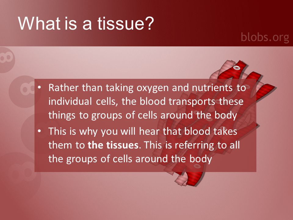 What is an organ.An organ is a group of tissues gathered together for a particular task, e.g.