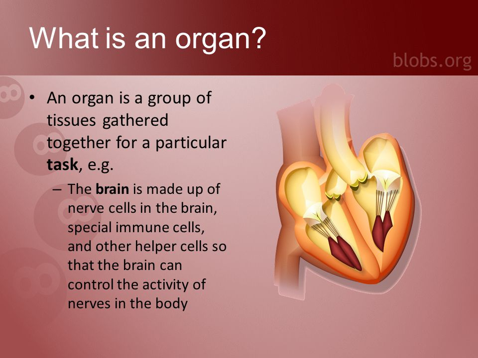 What is an organ system.