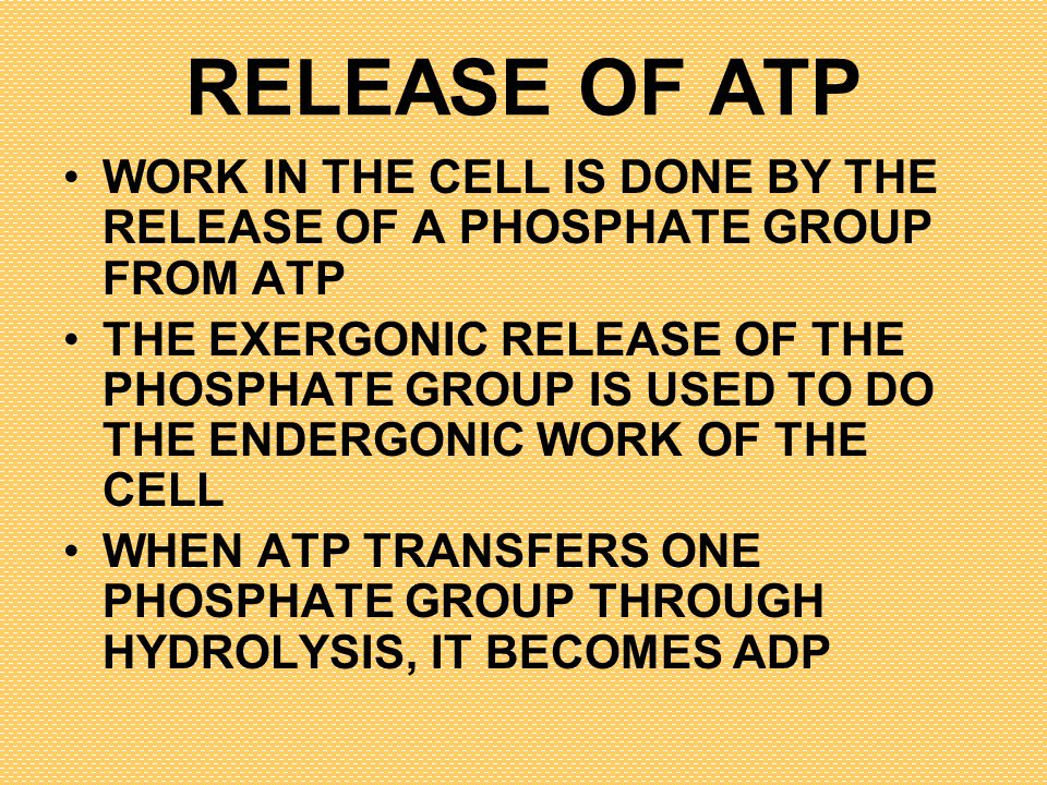 RELEASE OF ATP WORK IN THE CELL IS DONE BY THE RELEASE OF A PHOSPHATE GROUP FROM ATP THE EXERGONIC RELEASE OF THE PHOSPHATE GROUP IS USED TO DO THE EN