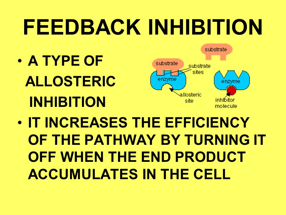 FEEDBACK INHIBITION A TYPE OF ALLOSTERIC INHIBITION IT INCREASES THE EFFICIENCY OF THE PATHWAY BY TURNING IT OFF WHEN THE END PRODUCT ACCUMULATES IN T
