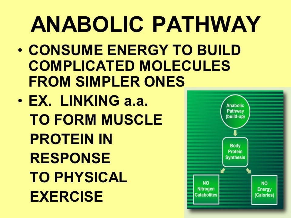 ANABOLIC PATHWAY CONSUME ENERGY TO BUILD COMPLICATED MOLECULES FROM SIMPLER ONES EX. LINKING a.a. TO FORM MUSCLE PROTEIN IN RESPONSE TO PHYSICAL EXERC