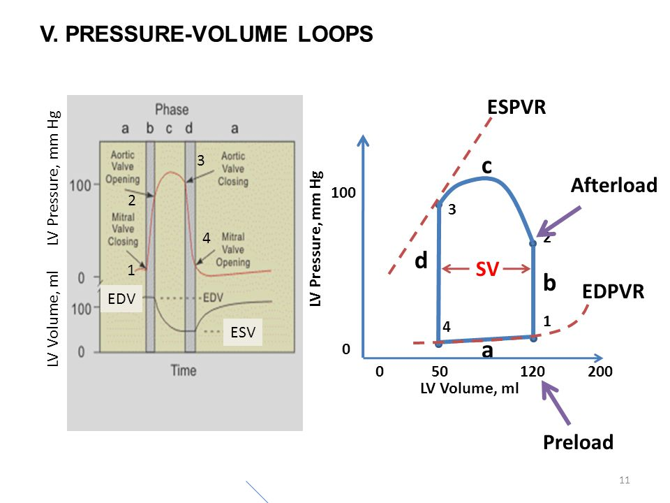 1 2 3 4 11 V. PRESSURE-VOLUME LOOPS LV Volume, ml LV Pressure, mm Hg a LV Volume, ml 020050120 LV Pressure, mm Hg 0 100 ESV EDV b c d ESPVR EDPVR 1 2