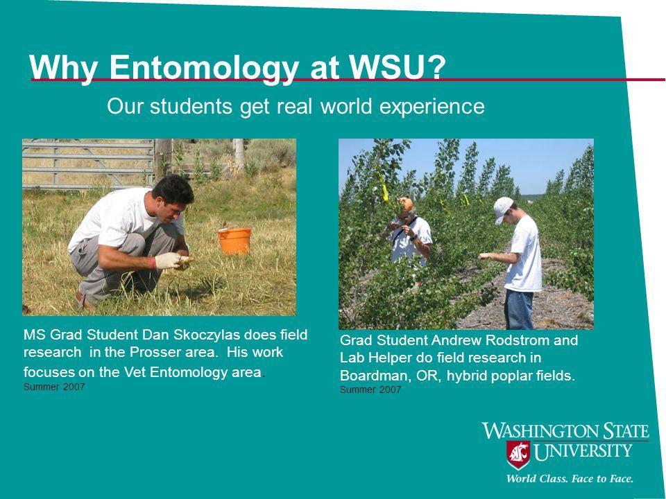 Why Entomology at WSU.