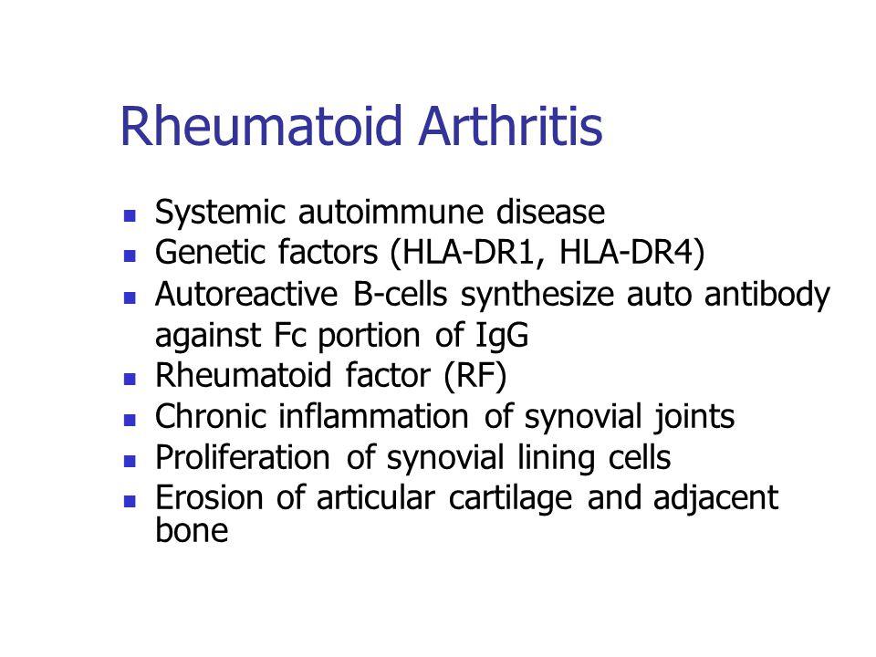 Rheumatoid Arthritis Systemic autoimmune disease Genetic factors (HLA-DR1, HLA-DR4) Autoreactive B-cells synthesize auto antibody against Fc portion o