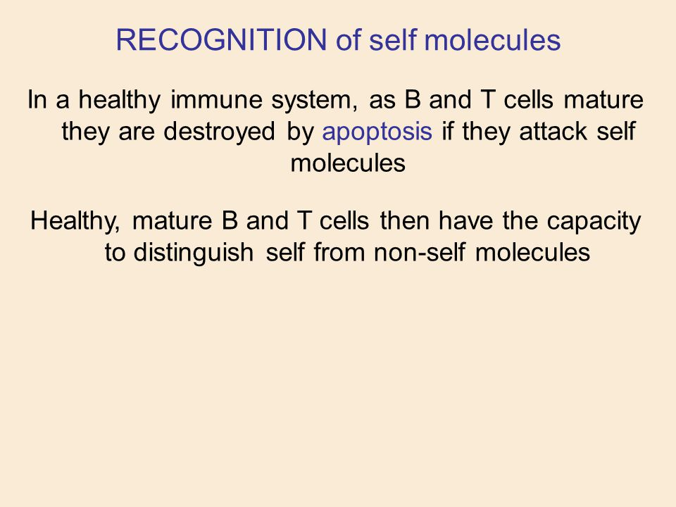 In a healthy immune system, as B and T cells mature they are destroyed by apoptosis if they attack self molecules RECOGNITION of self molecules Health