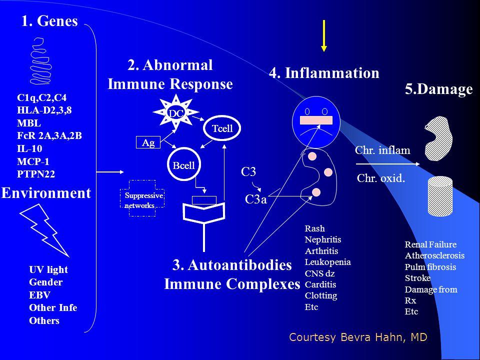 2. Abnormal Immune Response C1q,C2,C4 HLA-D2,3,8 MBL FcR 2A,3A,2B IL-10 MCP-1 PTPN22 Rash Nephritis Arthritis Leukopenia CNS dz Carditis Clotting Etc