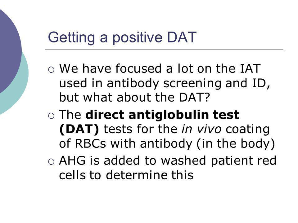 Getting a positive DAT We have focused a lot on the IAT used in antibody screening and ID, but what about the DAT? The direct antiglobulin test (DAT)